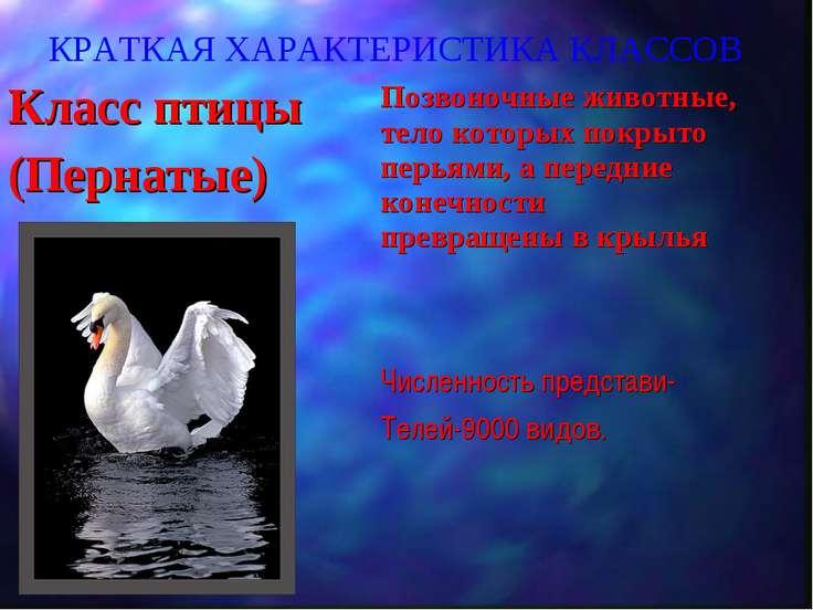 КРАТКАЯ ХАРАКТЕРИСТИКА КЛАССОВ Класс птицы (Пернатые) Позвоночные животные, т...