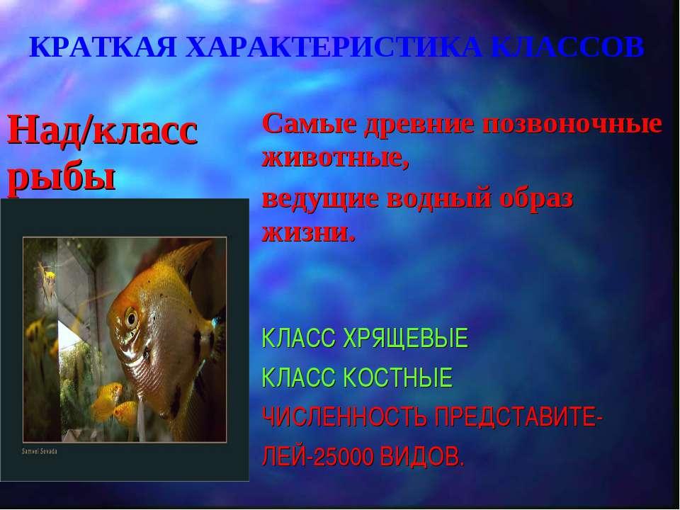 КРАТКАЯ ХАРАКТЕРИСТИКА КЛАССОВ Над/класс рыбы Самые древние позвоночные живот...