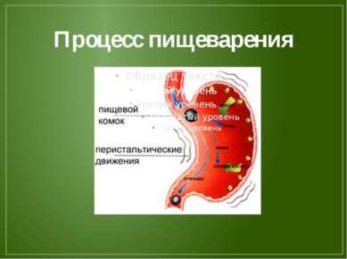 Процесс пищеварения