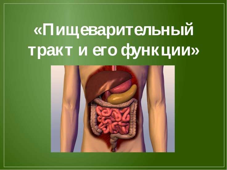 «Пищеварительный тракт и его функции»