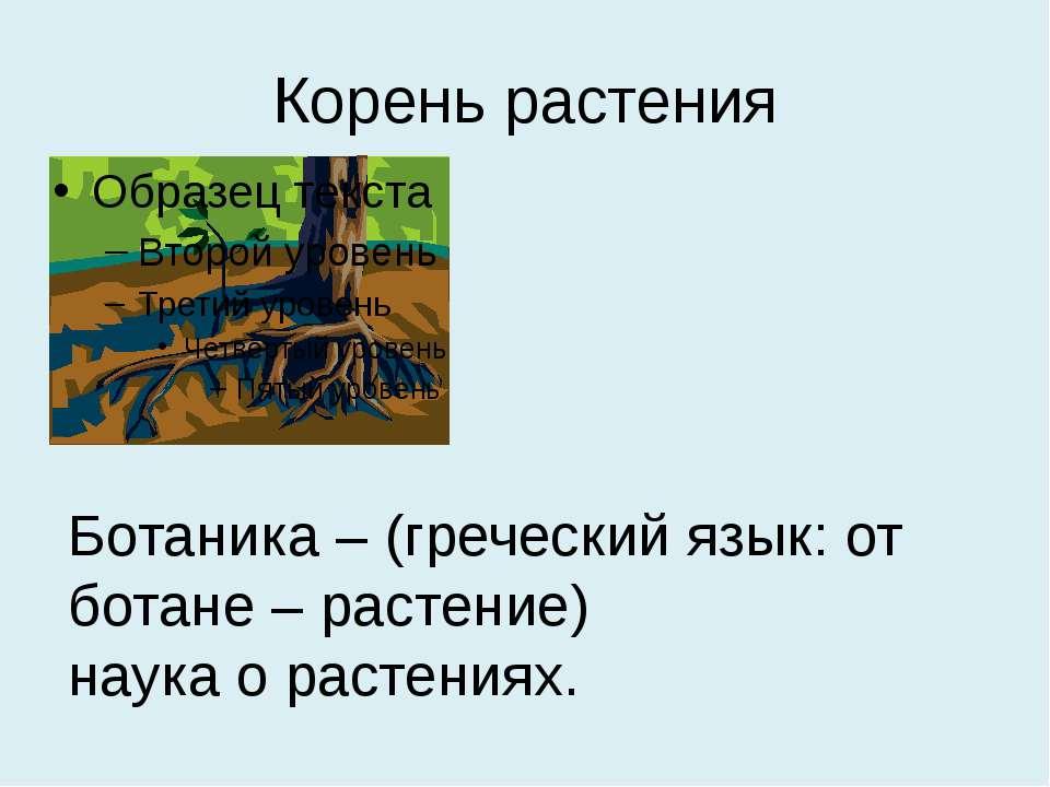 Корень растения Ботаника – (греческий язык: от ботане – растение) наука о рас...
