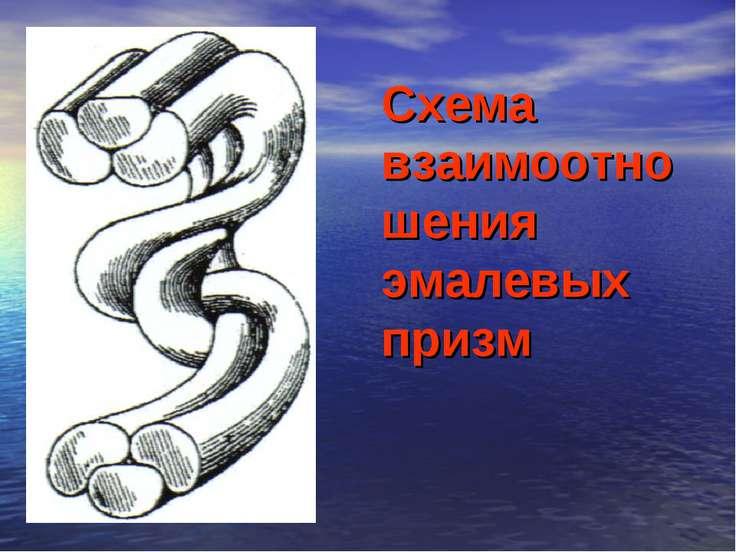 Схема взаимоотношения эмалевых призм