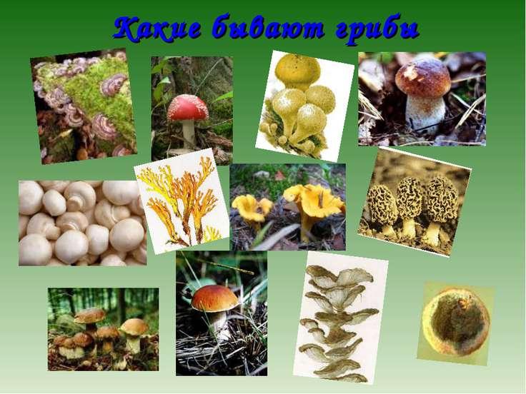 Какие бывают грибы