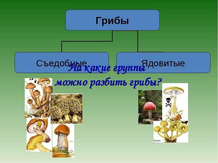 На какие группы можно разбить грибы?