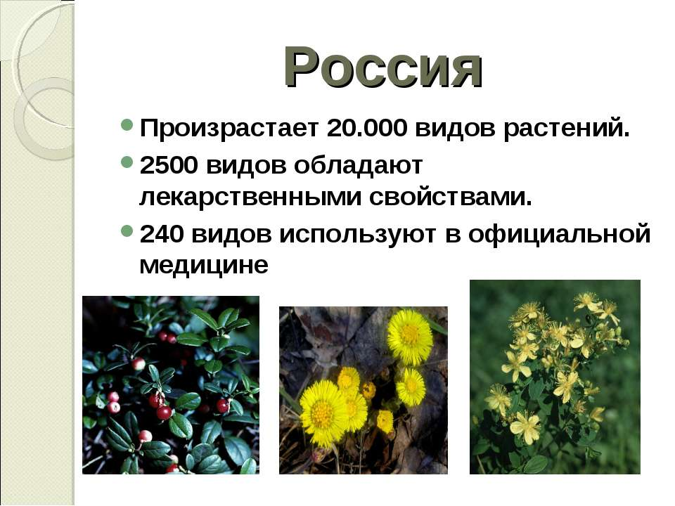 Россия Произрастает 20.000 видов растений. 2500 видов обладают лекарственными...
