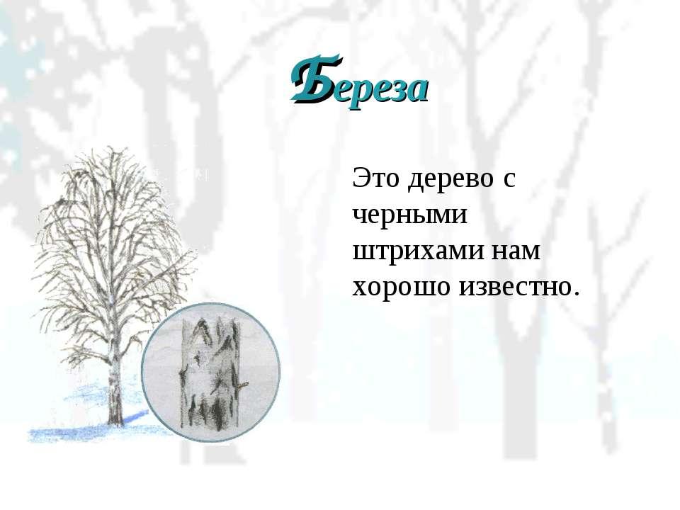 Береза Это дерево с черными штрихами нам хорошо известно.