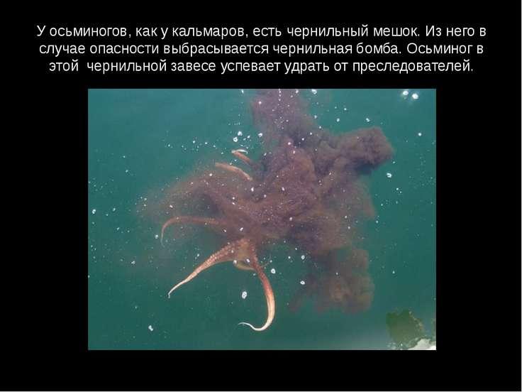 У осьминогов, как у кальмаров, есть чернильный мешок. Из него в случае опасно...