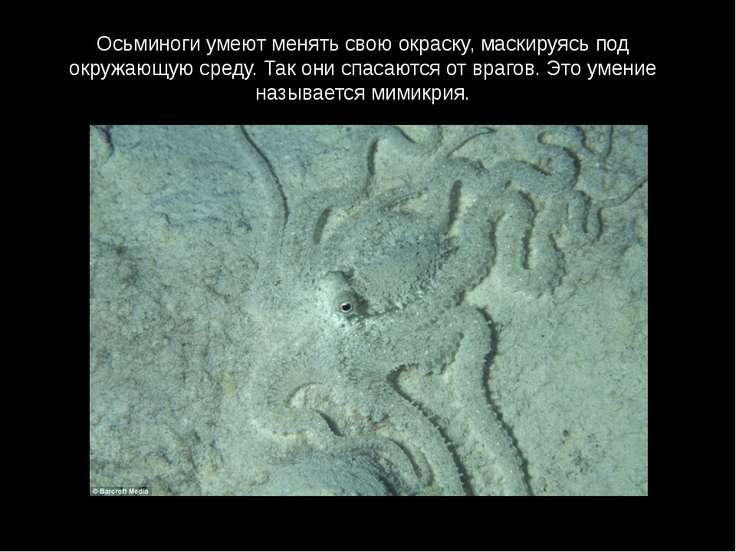 Осьминоги умеют менять свою окраску, маскируясь под окружающую среду. Так они...