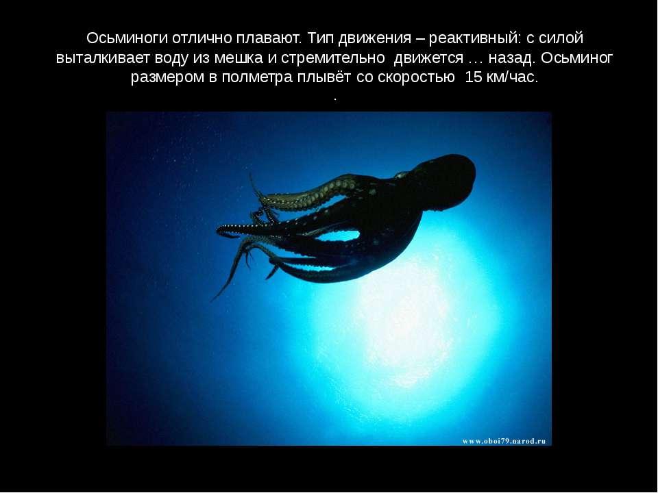 Осьминоги отлично плавают. Тип движения – реактивный: с силой выталкивает вод...