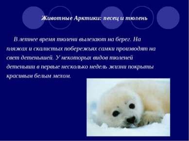 Животные Арктики: песец и тюлень В летнее время тюлени вылезают на берег. На ...