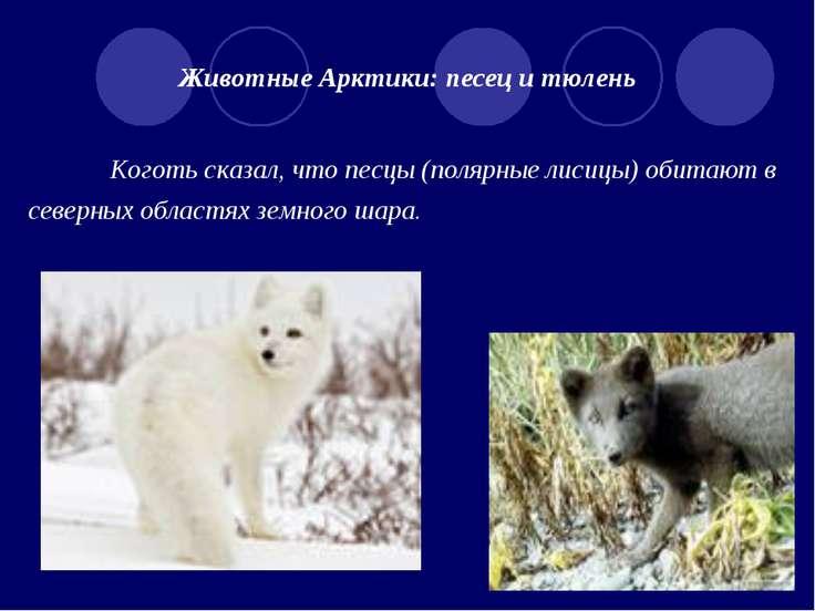 Животные Арктики: песец и тюлень Коготь сказал, что песцы (полярные лисицы) о...