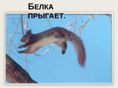БЕЛКА ПРЫГАЕТ.