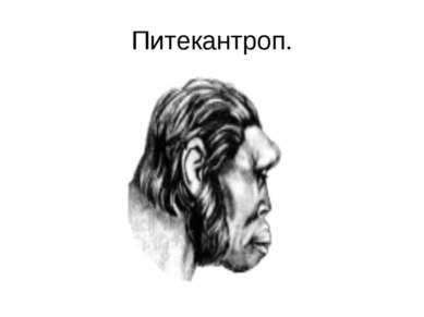 Питекантроп.