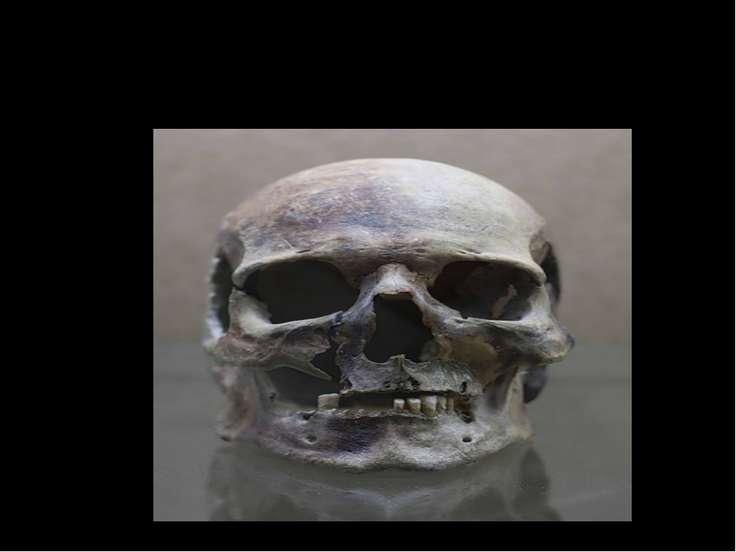 Археологические раскопки – череп древнего человека.