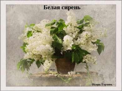 Игорь Тернюк Белая сирень