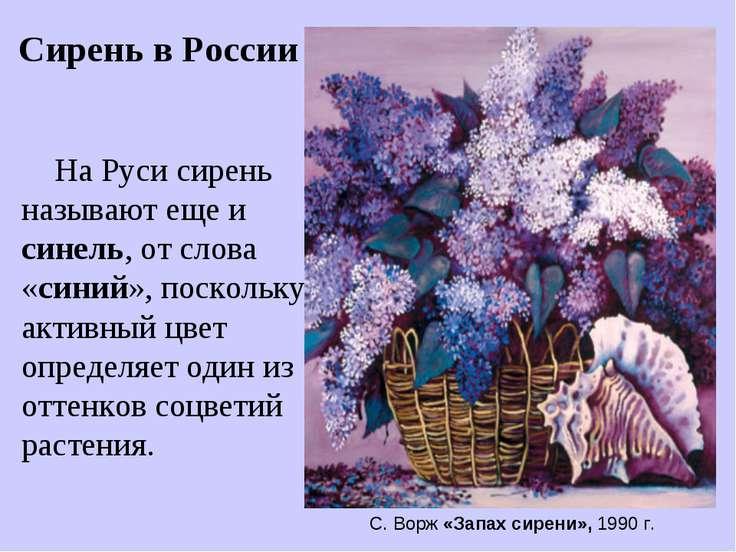 На Руси сирень называют еще и синель, от слова «синий», поскольку активный цв...