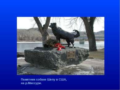 , Памятник собаке Шепу в США, на р.Миссури.