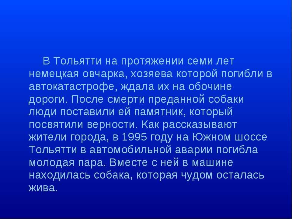 В Тольятти на протяжении семи лет немецкая овчарка, хозяева которой погибли в...