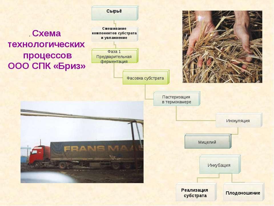 . Схема технологических процессов ООО СПК «Бриз»
