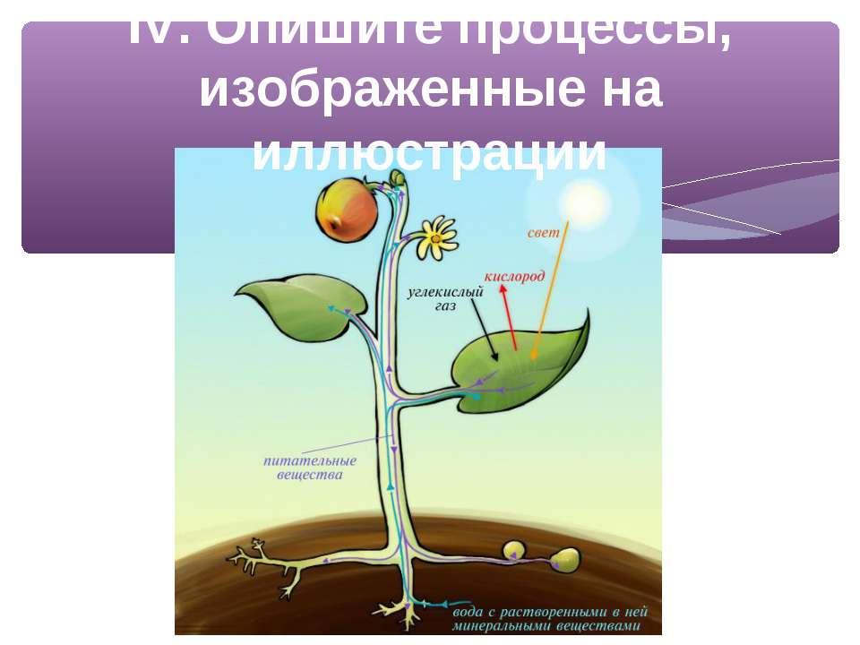 IV. Опишите процессы, изображенные на иллюстрации