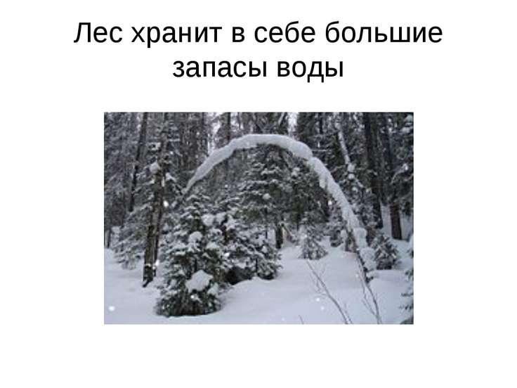 Лес хранит в себе большие запасы воды