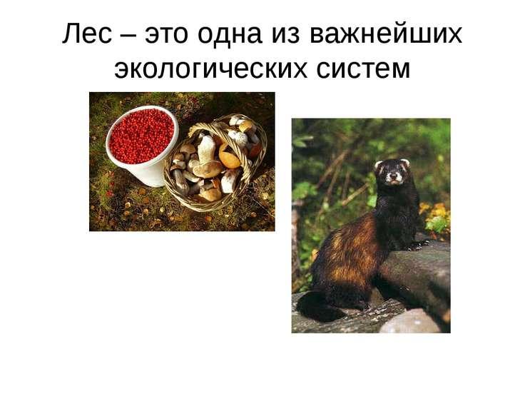 Лес – это одна из важнейших экологических систем