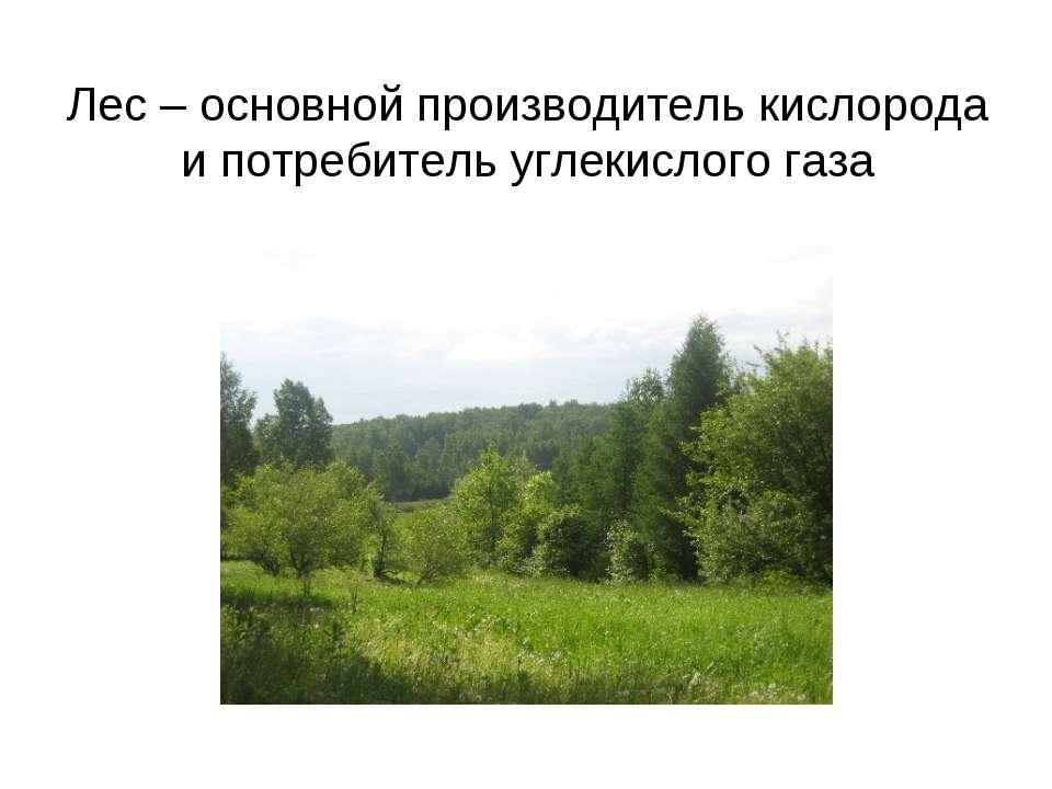 Лес – основной производитель кислорода и потребитель углекислого газа