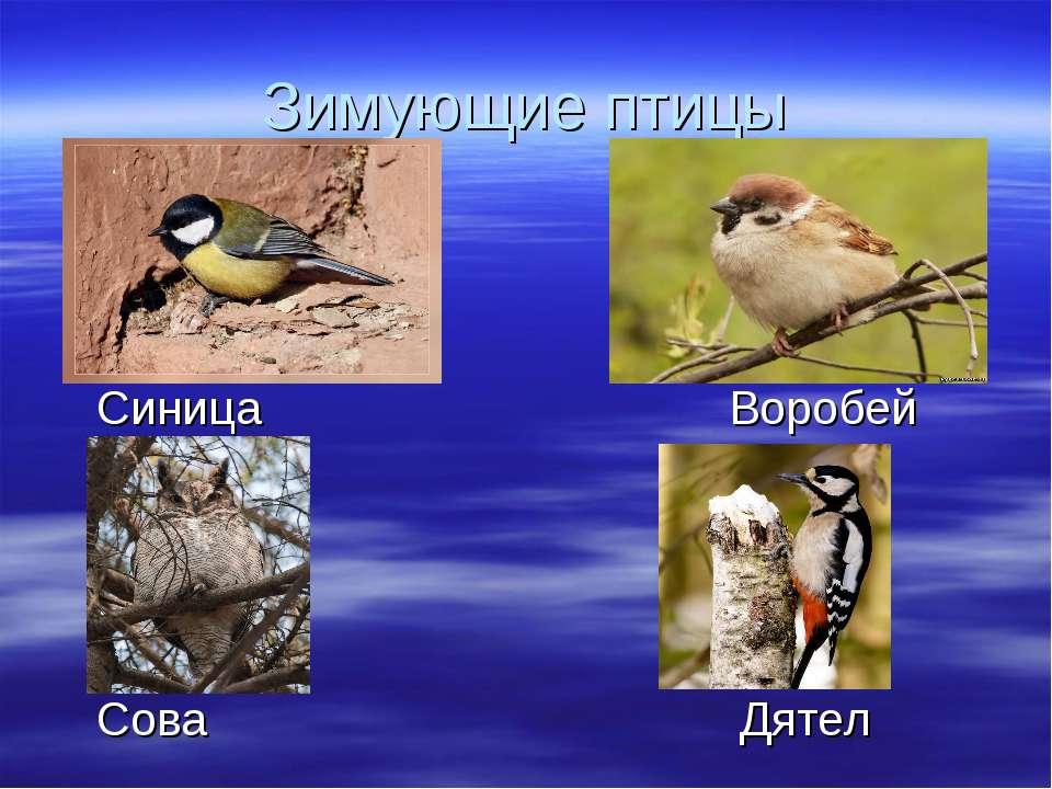 Зимующие птицы Синица Воробей Сова Дятел