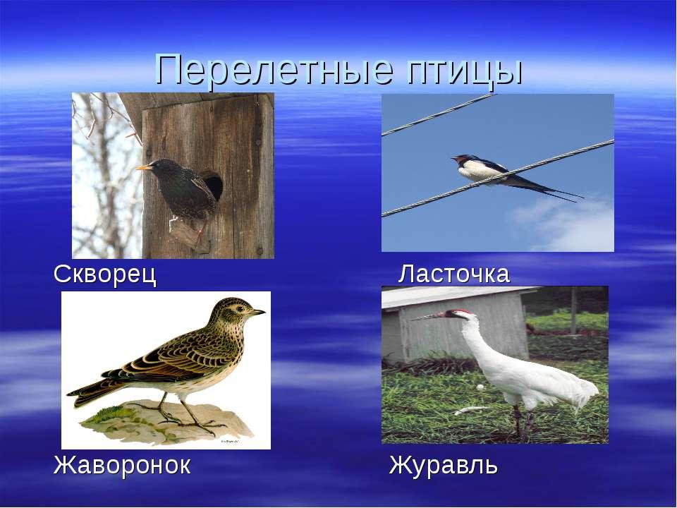 Перелетные птицы Скворец Ласточка Жаворонок Журавль