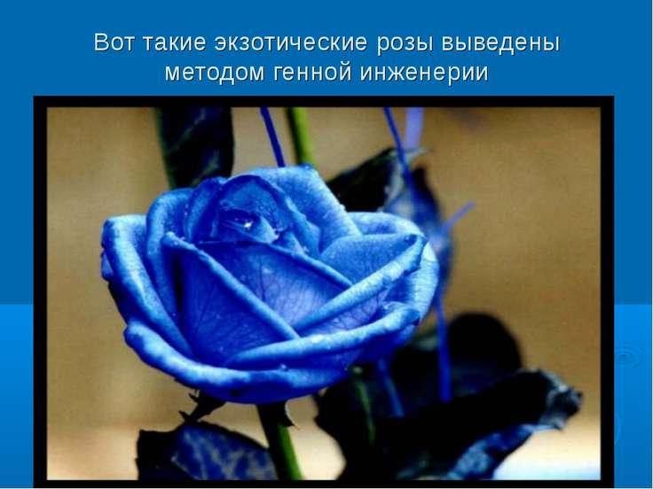 Вот такие экзотические розы выведены методом генной инженерии