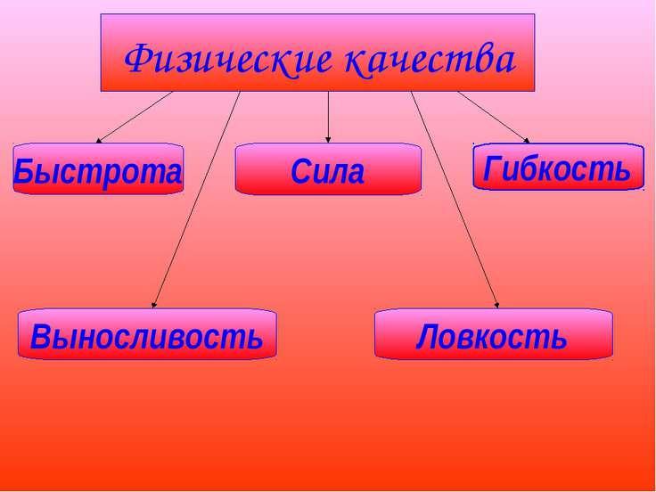 Физические качества Быстрота Сила Гибкость Выносливость Ловкость
