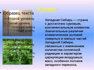 Климат . Западная Сибирь — страна с достаточно суровым, континентальным клима...