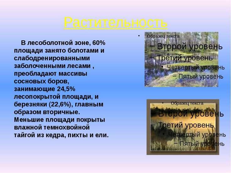 Растительность В лесоболотной зоне, 60% площади занято болотами и слабодренир...