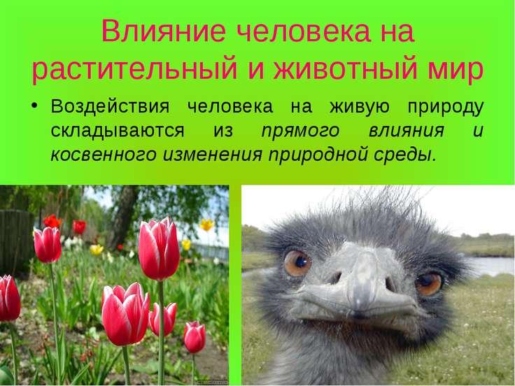Влияние человека на растительный и животный мир Воздействия человека на живую...