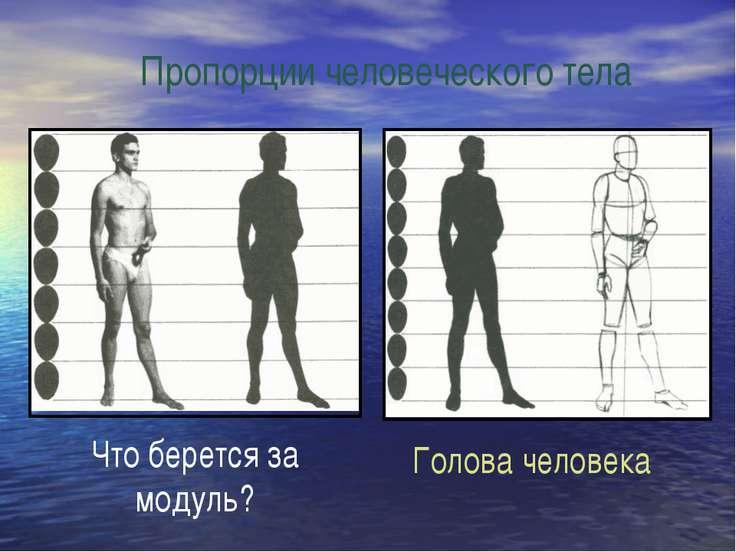 Пропорции человеческого тела Что берется за модуль? Голова человека