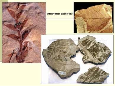 Отпечатки растений