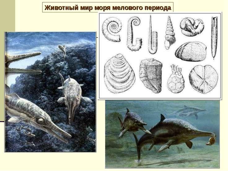 Животный мир моря мелового периода