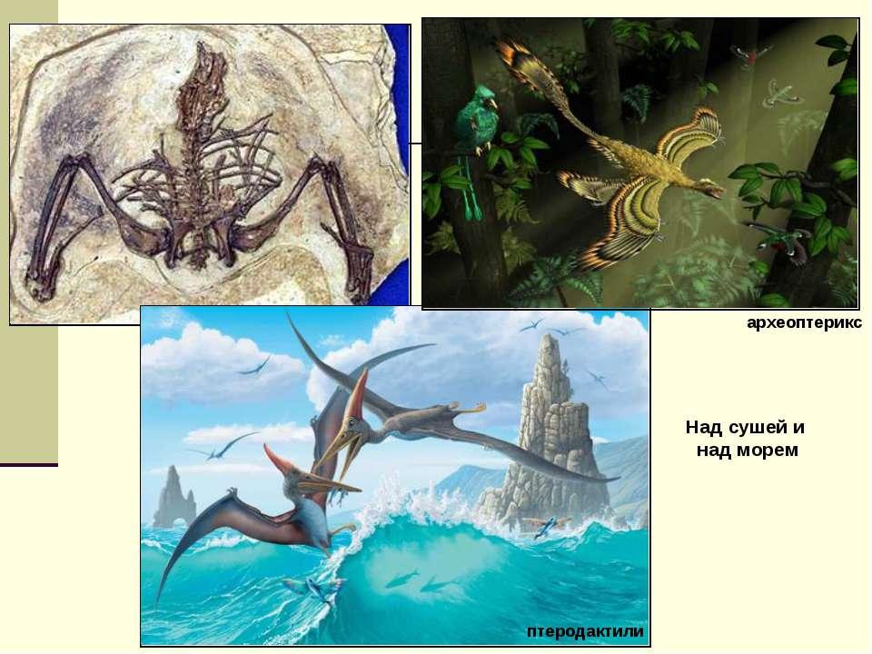 Над сушей и над морем птеродактили археоптерикс