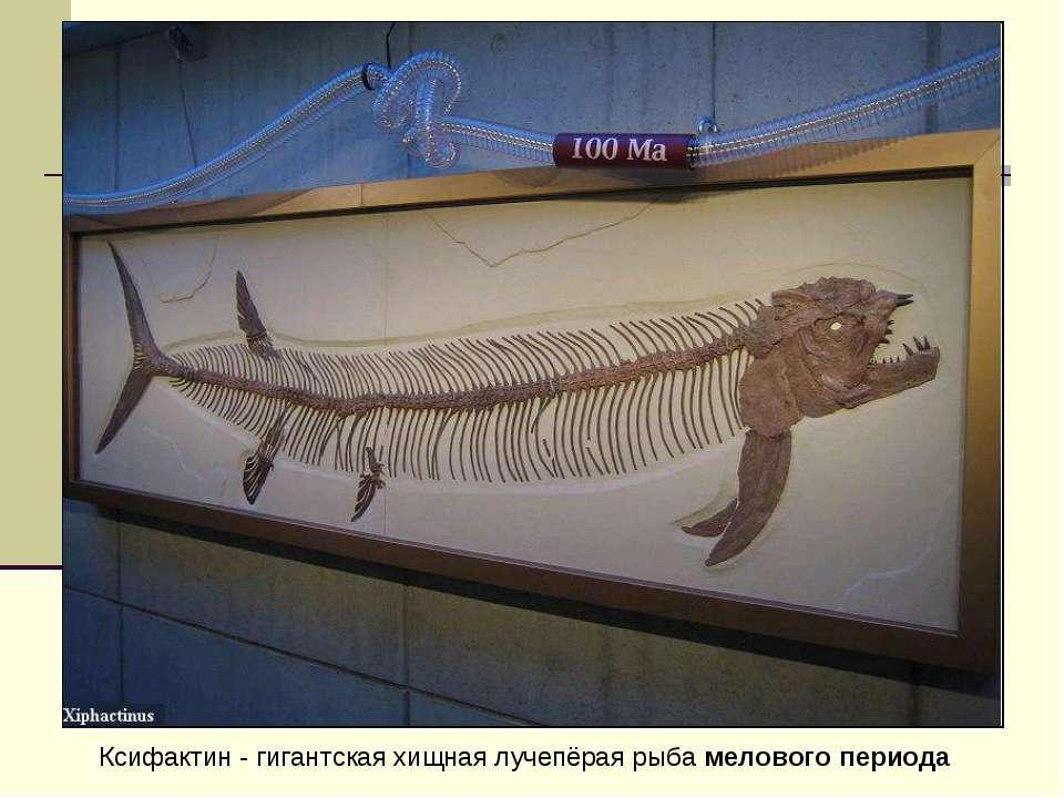 Ксифактин - гигантская хищная лучепёрая рыба мелового периода