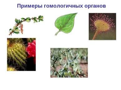 Примеры гомологичных органов насекомоядный лист росянки колючки барбариса и к...
