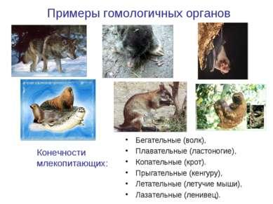 Бегательные (волк), Плавательные (ластоногие), Копательные (крот). Прыгательн...
