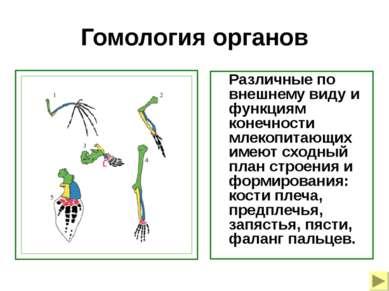 Гомология органов Различные по внешнему виду и функциям конечности млекопитаю...