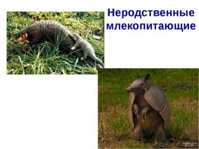 Неродственные млекопитающие Панголин Африка Отряд панголины (ящеры) Броненосе...