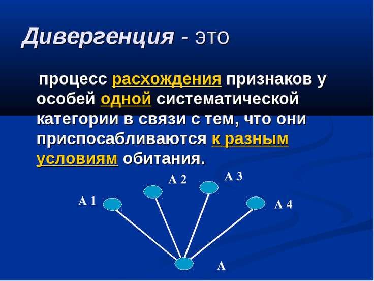 Дивергенция - это процесс расхождения признаков у особей одной систематическо...