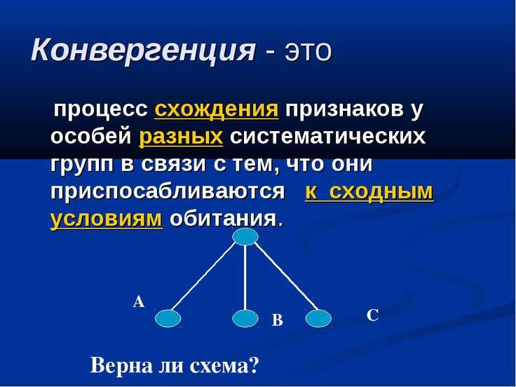 Конвергенция - это процесс схождения признаков у особей разных систематически...