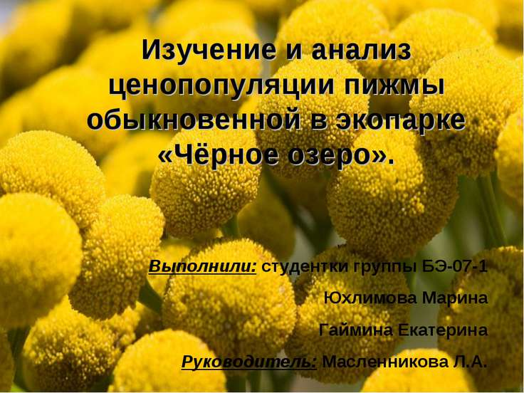Изучение и анализ ценопопуляции пижмы обыкновенной в экопарке «Чёрное озеро»....