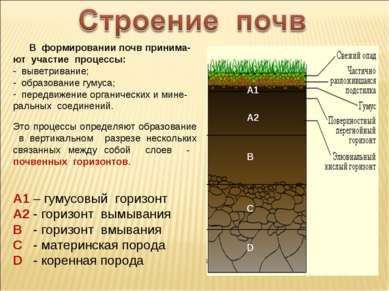 В формировании почв принима-ют участие процессы: выветривание; образование гу...