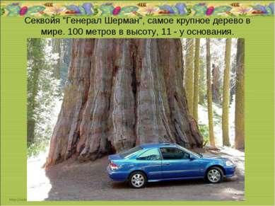 """Секвойя """"Генерал Шерман"""", самое крупное дерево в мире. 100 метров в высоту, 1..."""
