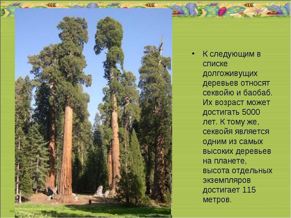 К следующим в списке долгоживущих деревьев относят секвойю и баобаб. Их возра...