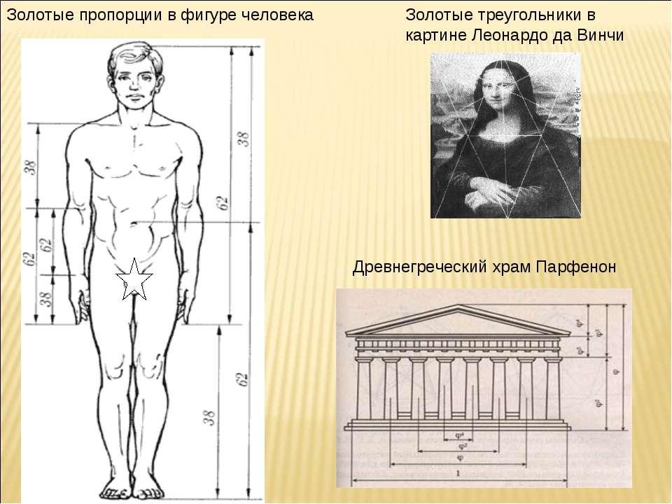 Золотые пропорции в фигуре человека Золотые треугольники в картине Леонардо д...